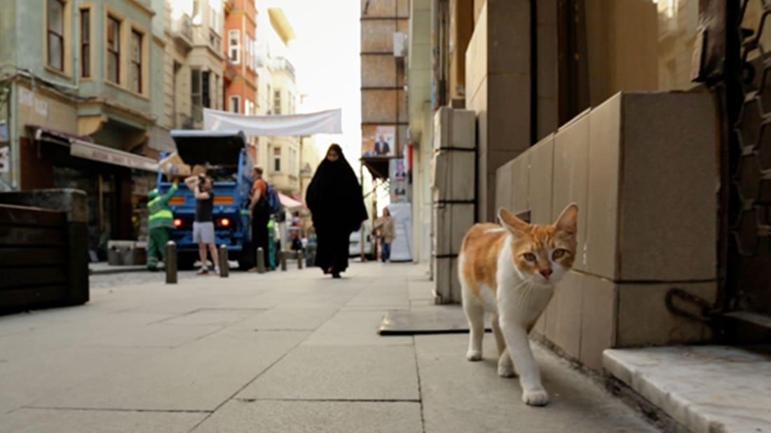 Kedi, A Heartwarming New Documentary, Stars Istanbul's Street Cats