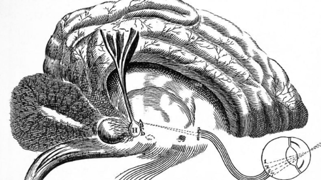 10 Mysterious Facts About the Pineal Gland   Mental Floss