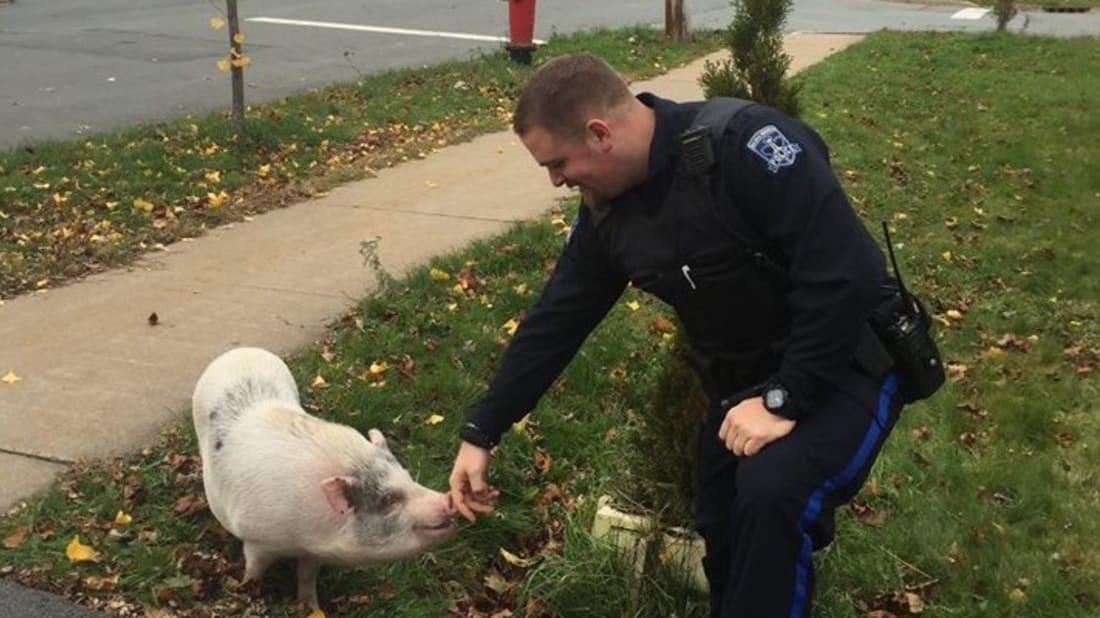 Halifax Regional Police via Facebook