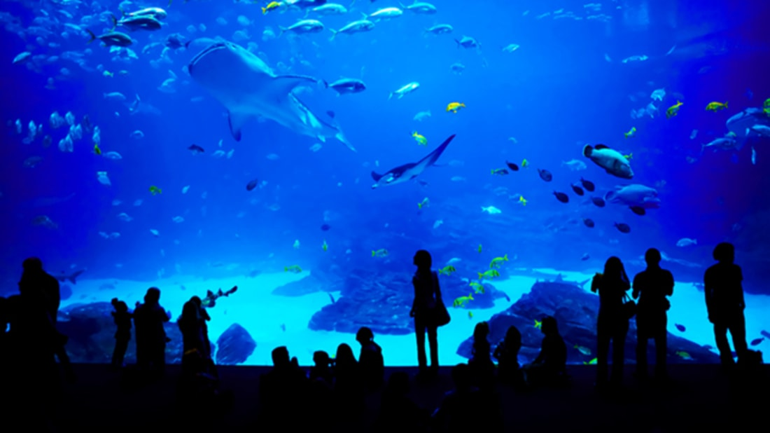11 Behind-the-Scenes Secrets of Aquariums