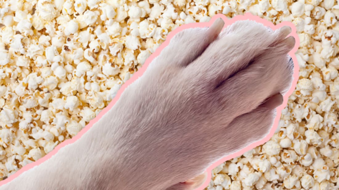 Why Do Your Dog's Feet Smell Like Popcorn? | Mental Floss