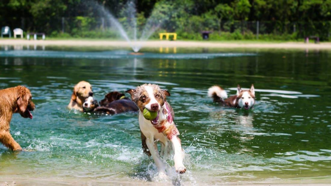10 Amazing Dog Parks   Mental Floss