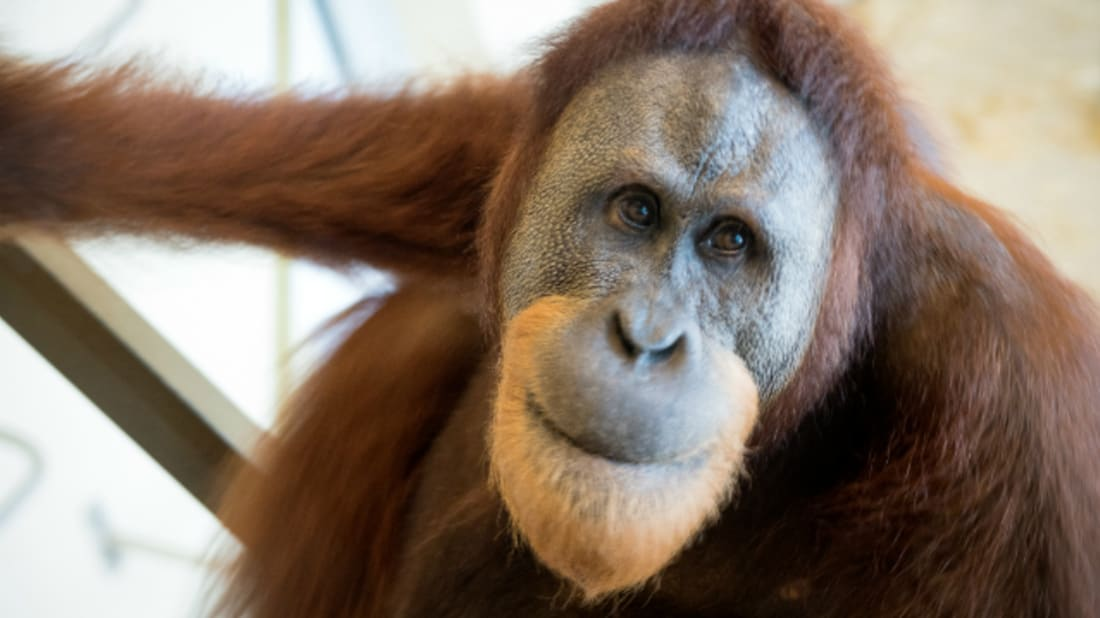 Mark Kaser, Indianapolis Zoo