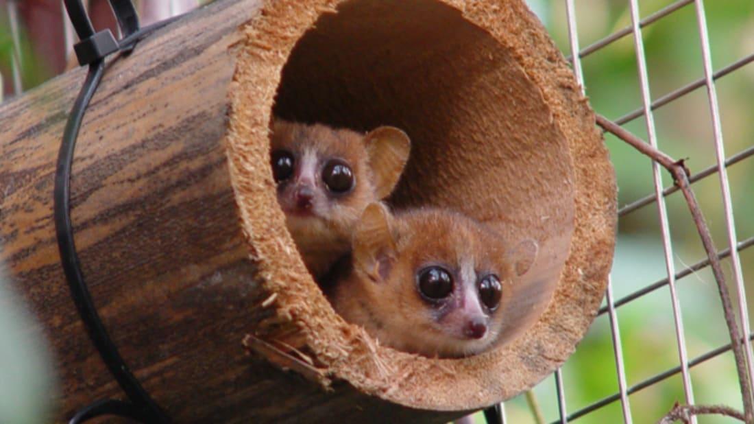 Image Credit: © Robert Zingg, Zoo Zurich