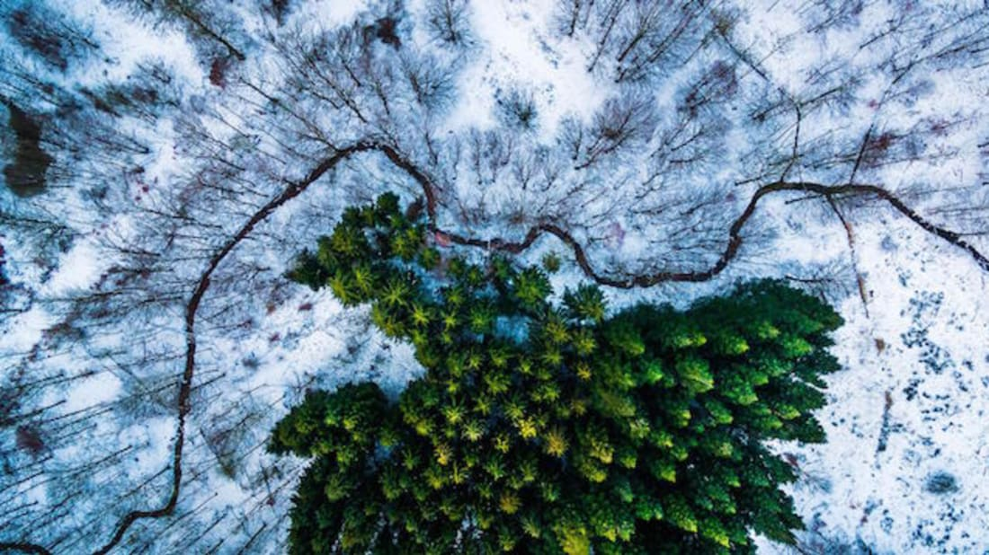 "Michael Bernholdt // ""Kalbyris forest Denmark"" First Place, Nature-Wildlife"