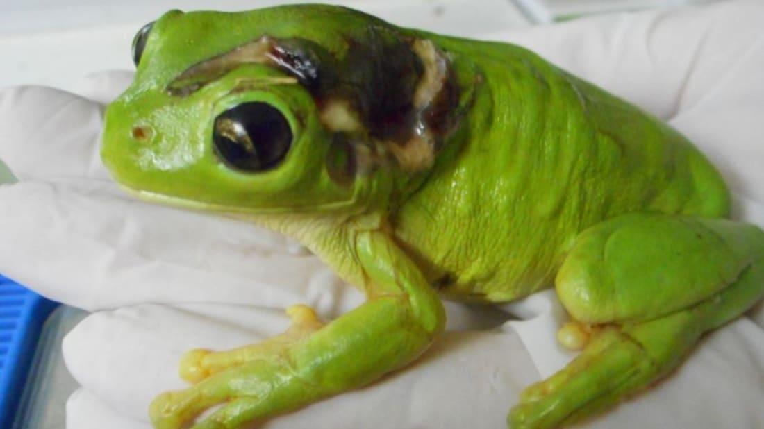 Deborah Pergolotti/Frog Safe, Inc.