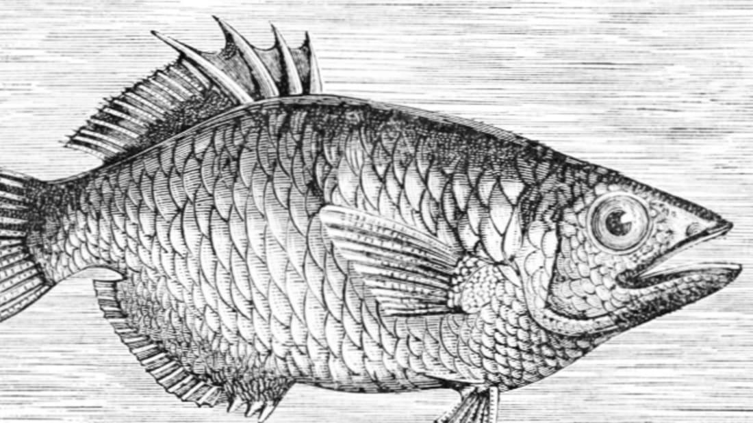 Illustrator unknown via Wikimedia Commons // Public Domain