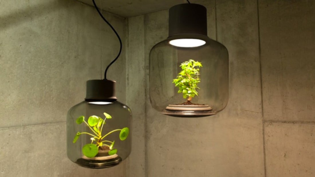 Plants To Grow Without Sunlight