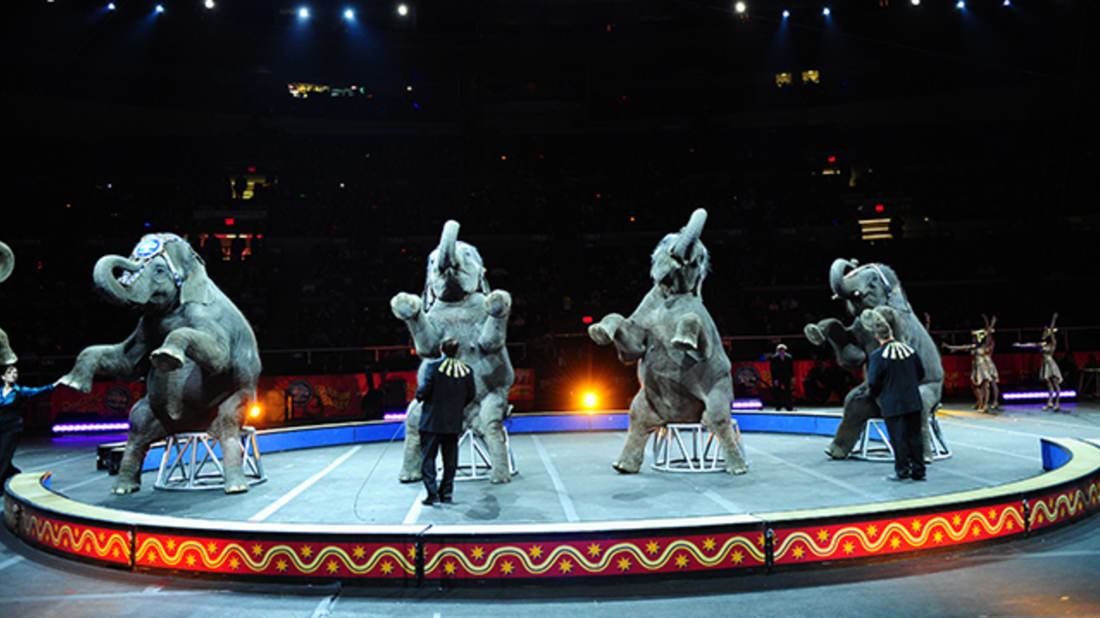 11 Facts About the History of Circus Elephants | Mental Floss