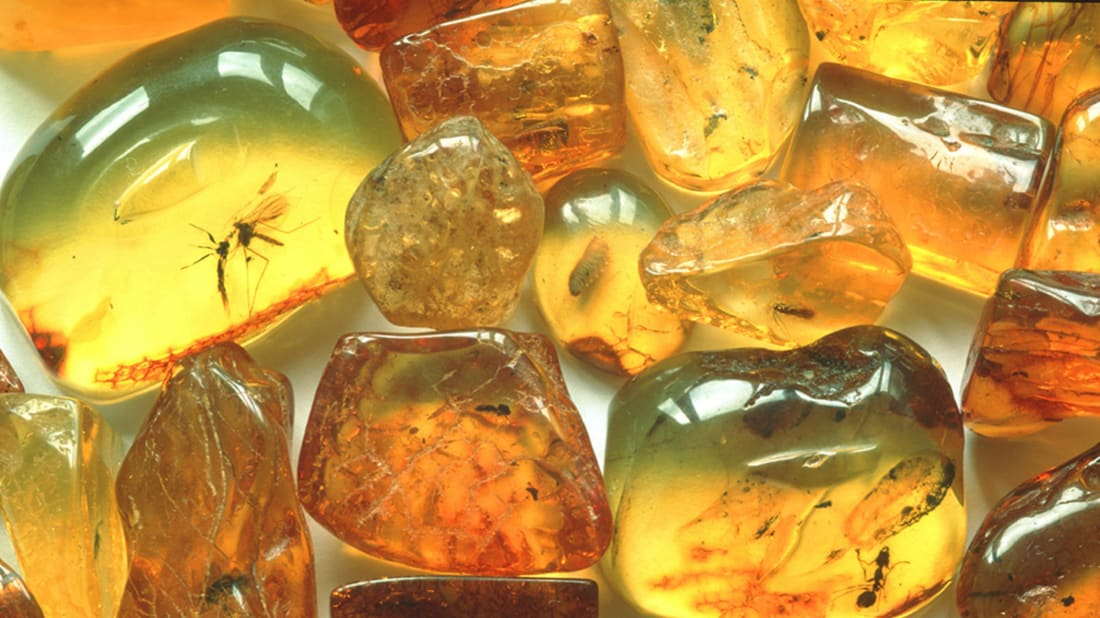 15 Clear Facts About Amber | Mental Floss