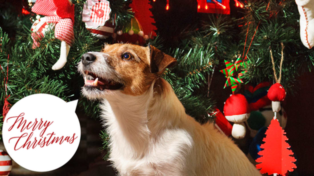 How Talking Animals Became a Christmas Legend