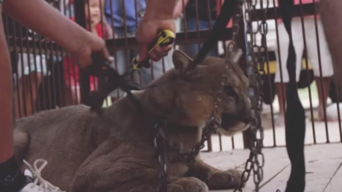 Animal Defenders International via YouTube