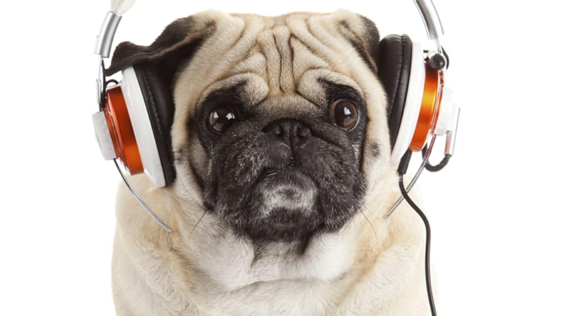 7 Scientific Studies About How Animals React to Music