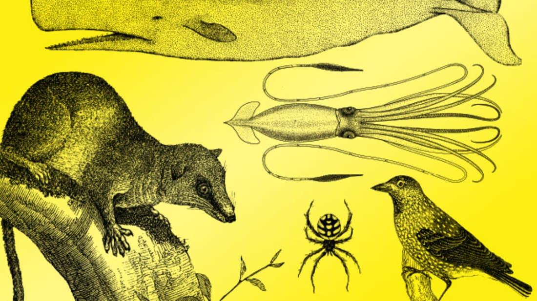 Illustration by Daniel Downey. Alamy (Tree Shrew). iStock (Spider, Clark's Nutcracker)