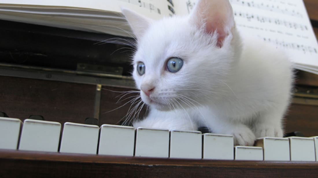 Are White Cats More Likely To Be Deaf Mental Floss