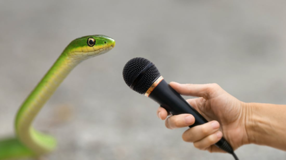 6 Sssecrets of a Snake-Sound Scientissst | Mental Floss
