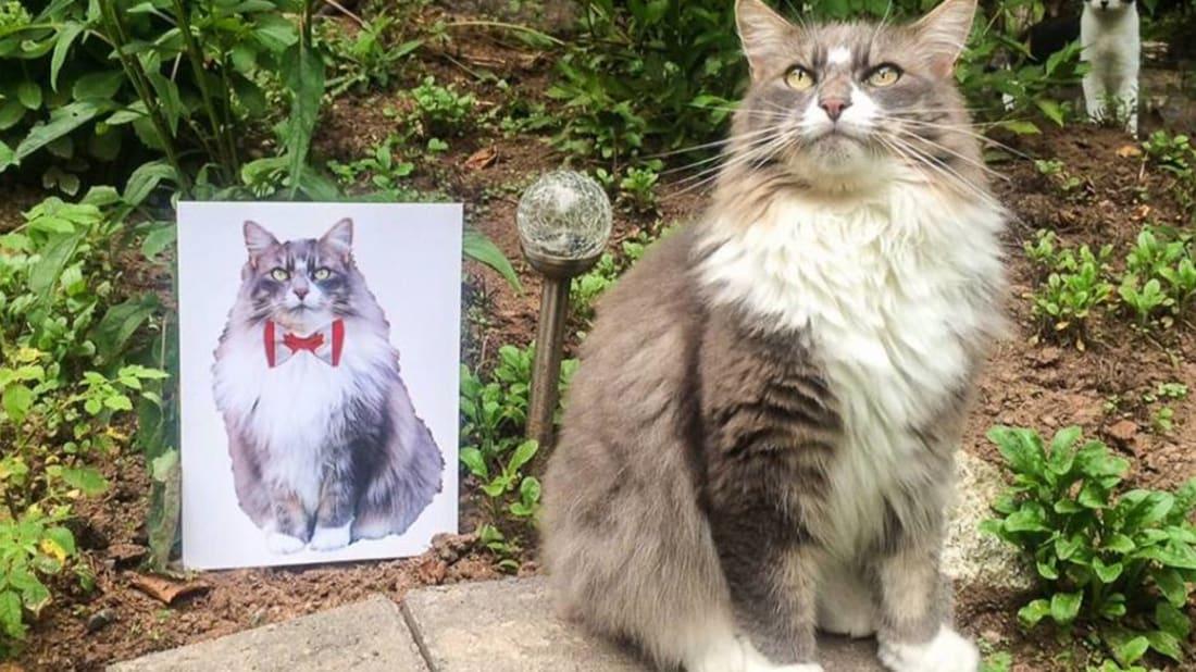 Tuxedo Party of Canada Cat Welfare Society via Facebook