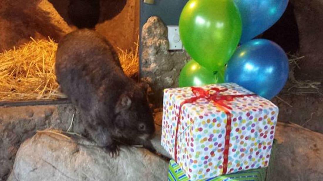 Facebook user, Patrick the Wombat