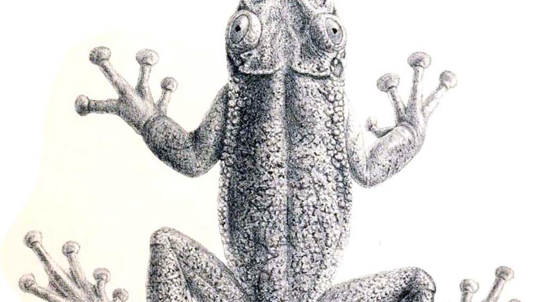 G. A. Boulenger via Wikimedia Commons // Public Domain