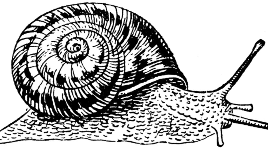 Illustration after a woodcut by A. N. Waterhouse // Public Domain