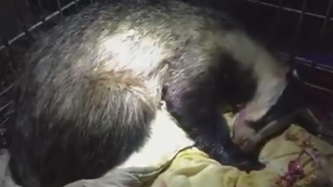 Fundacja Na Rzecz Zwierząt via YouTube