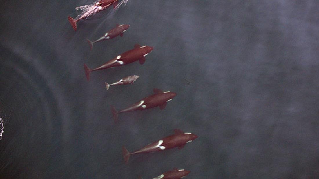NOAA, Vancouver Aquarium