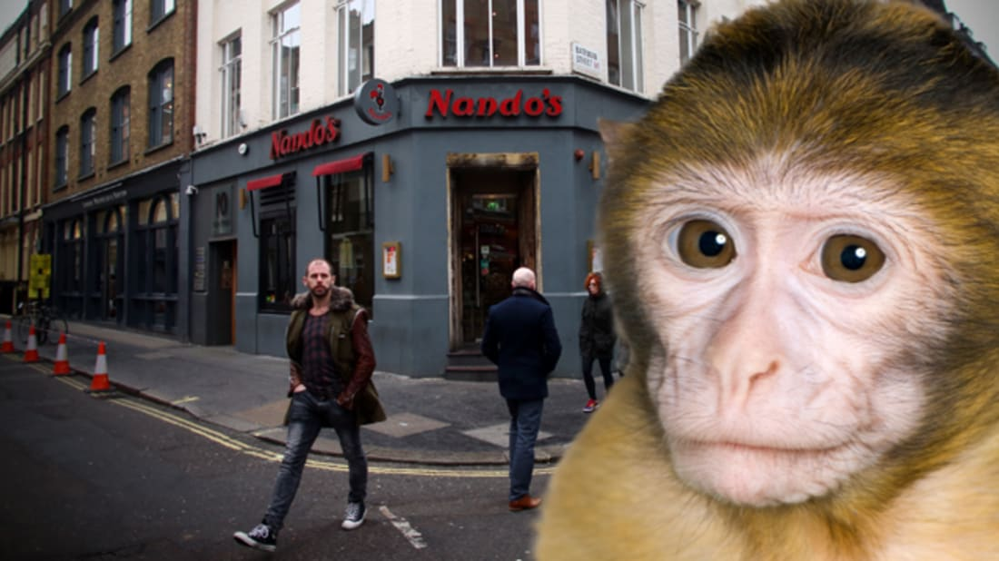 getty images (nandos) / istock (monkey)