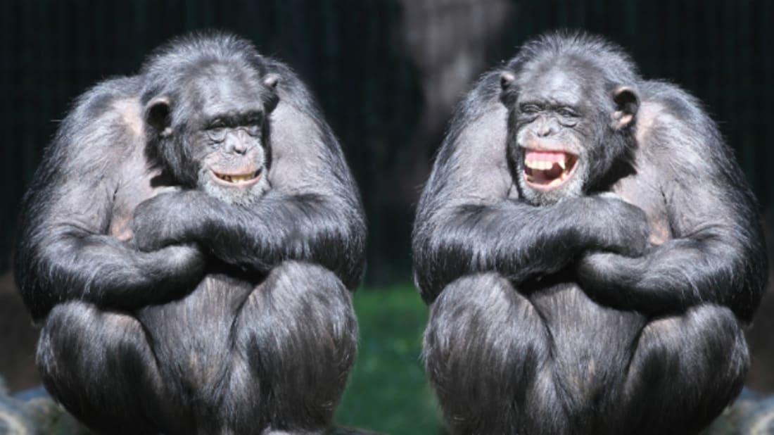 How Do Animals Laugh? | Mental Floss