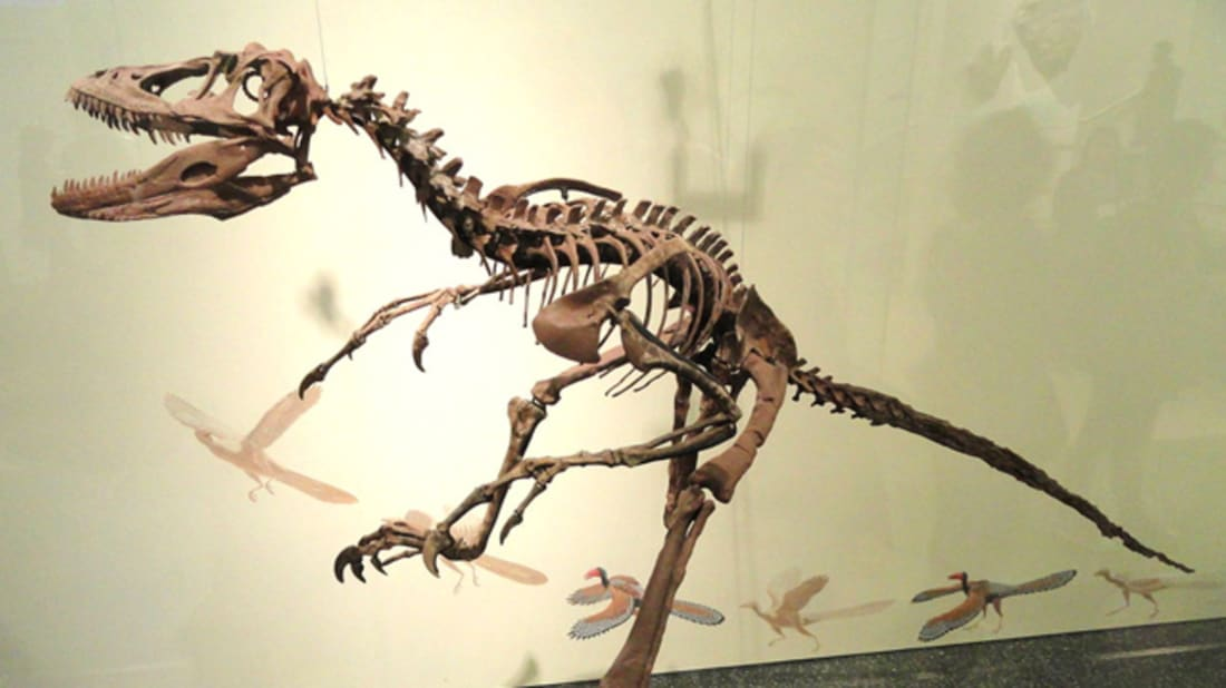 10 Fun Facts About Deinonychus | Mental Floss