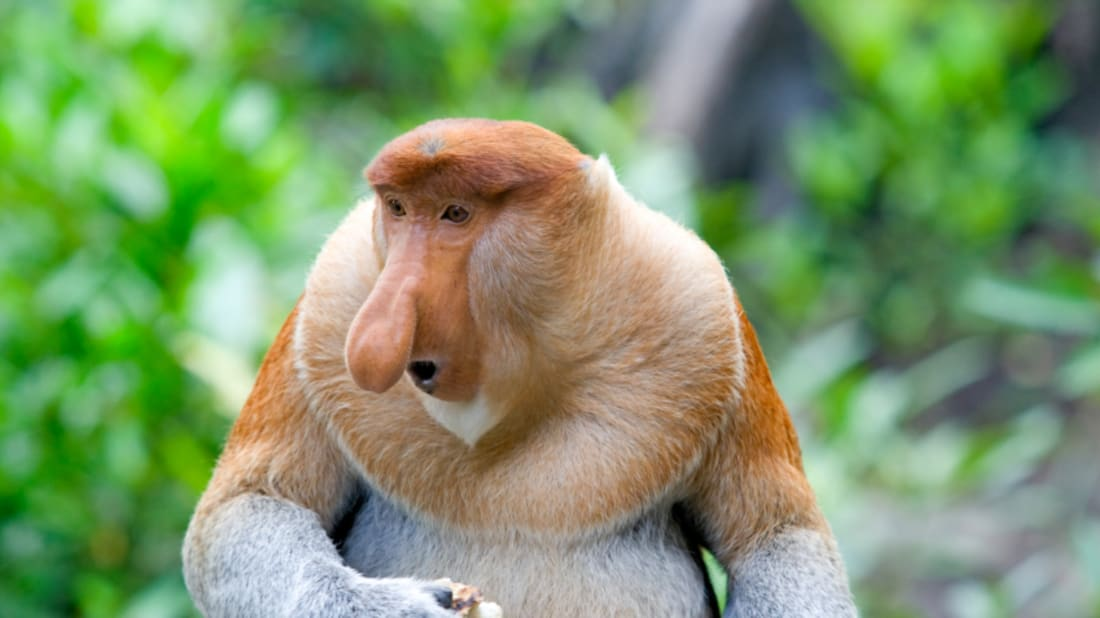 Weird Animals With Big Noses 9