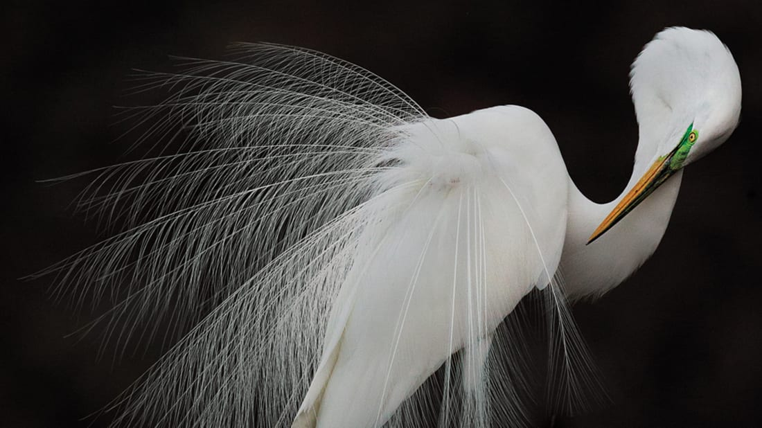 Melissa Groo//Audubon Photography Awards