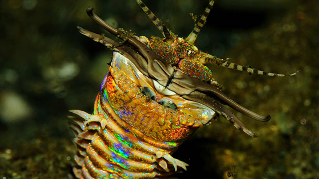 5 Awesome (and Occasionally Terrifying) Marine Worms | Mental Floss