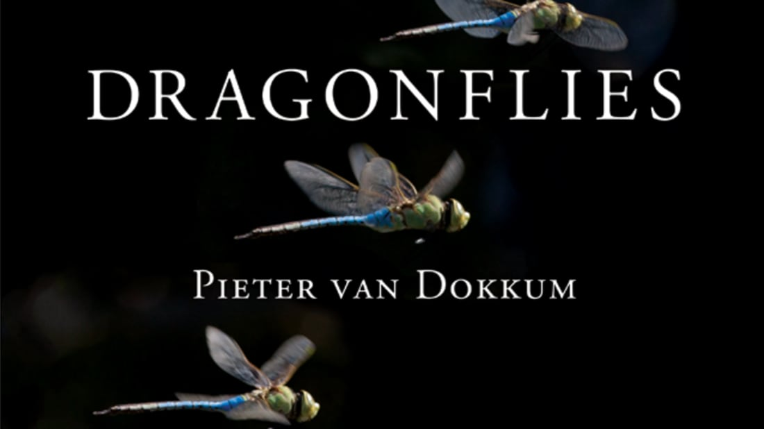 © Pieter Van Dokkum