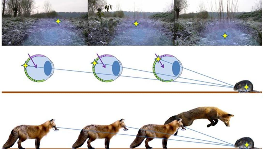 Biology Letters, doi:10.1098/rsbl.2010.1145