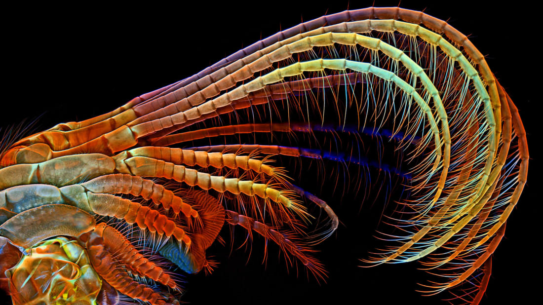 Dr. Igor Siwanowicz, 2014 Olympus BioScapes Digital Imaging Competition®