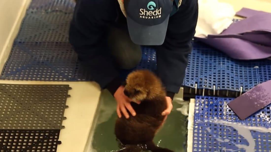 Shedd Aquarium, Youtube