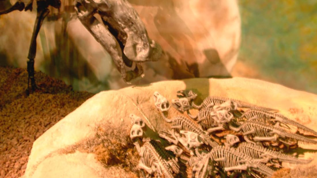 10 Motherly Facts About Maiasaura