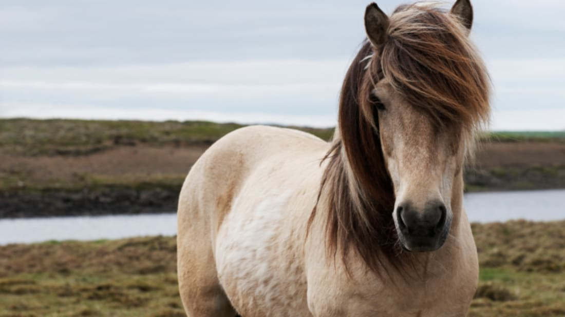 The Origins Of 12 Horse Related Idioms Mental Floss