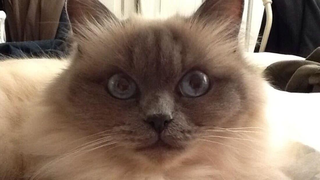 Jessi-Cat at Twitter