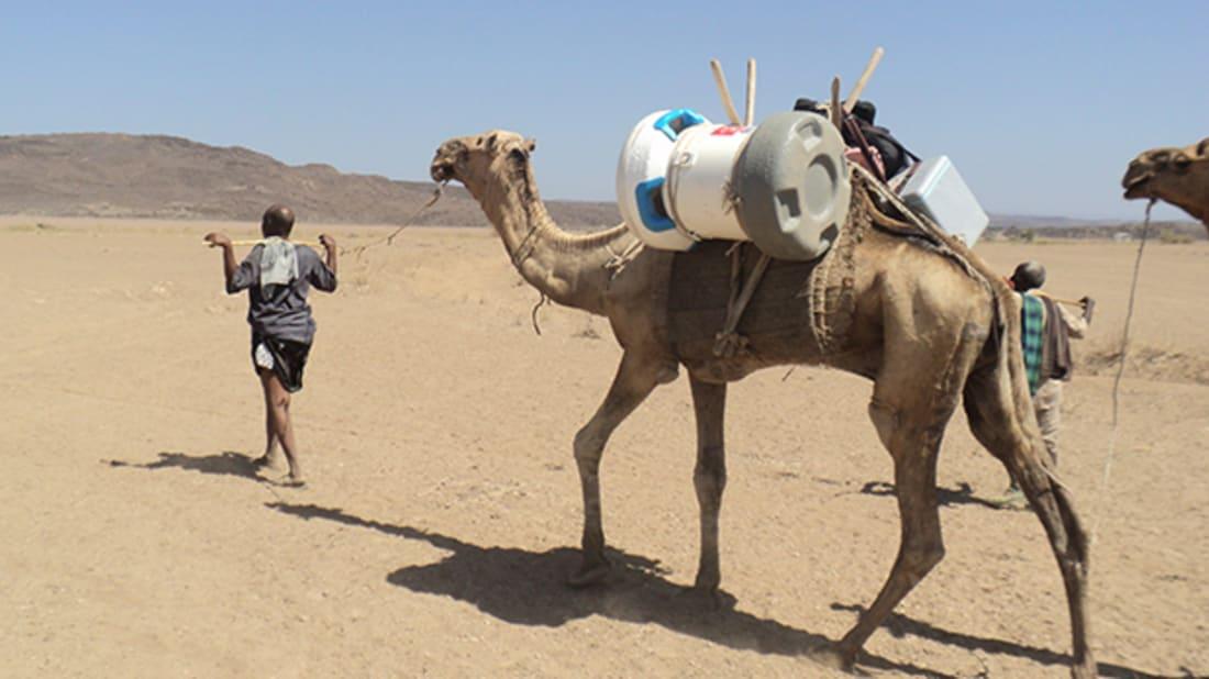 Global Good (Testing Passive Cooler on Camel)
