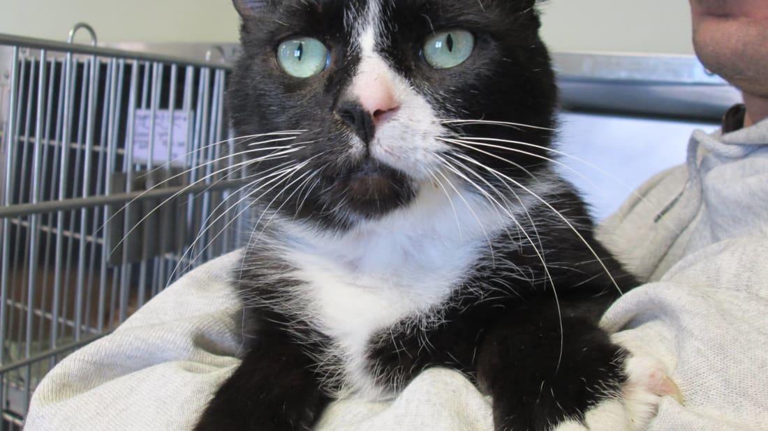 Scottsville Veterinary Adoptions/Facebook