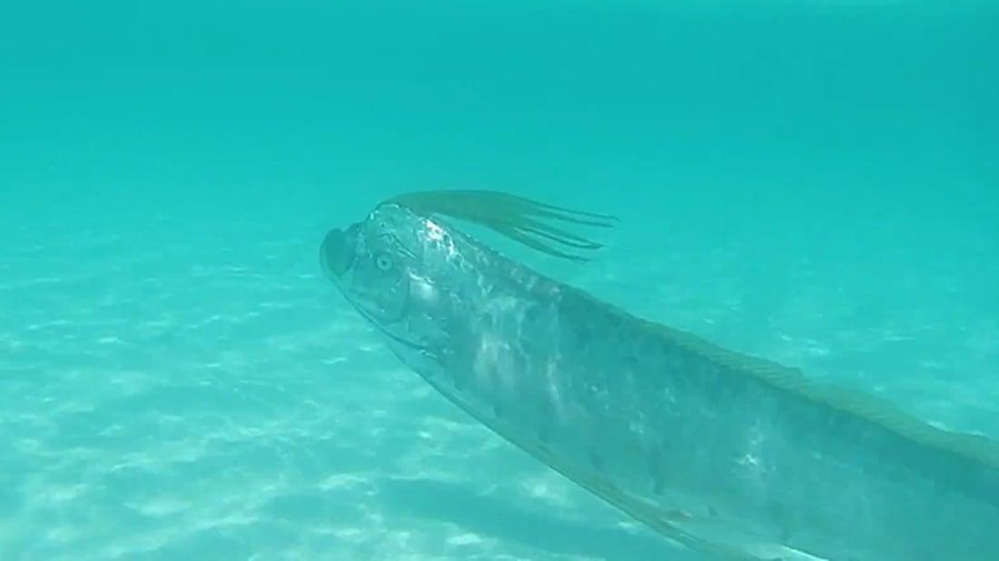 YouTube / Shedd Aquarium