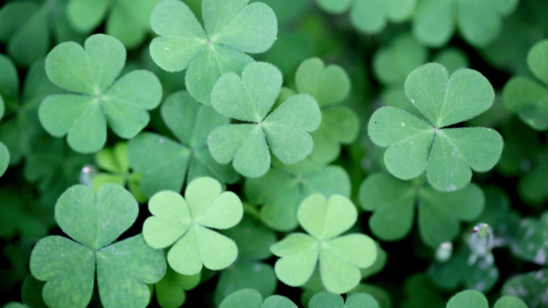 5173847e 15 Things You Might Not Know About St. Patrick's Day | Mental Floss