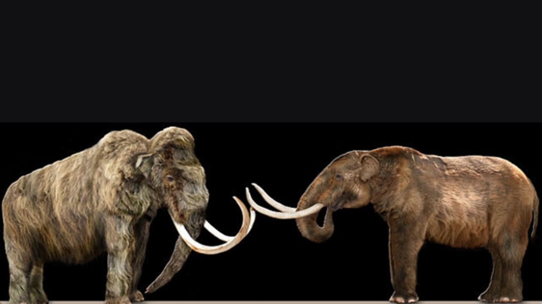 What's the Difference Between a Mammoth and a Mastodon