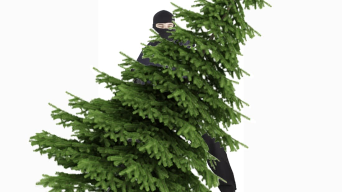 Christmas Tree Spray.10 Attempts To Thwart Christmas Tree Thieves Mental Floss