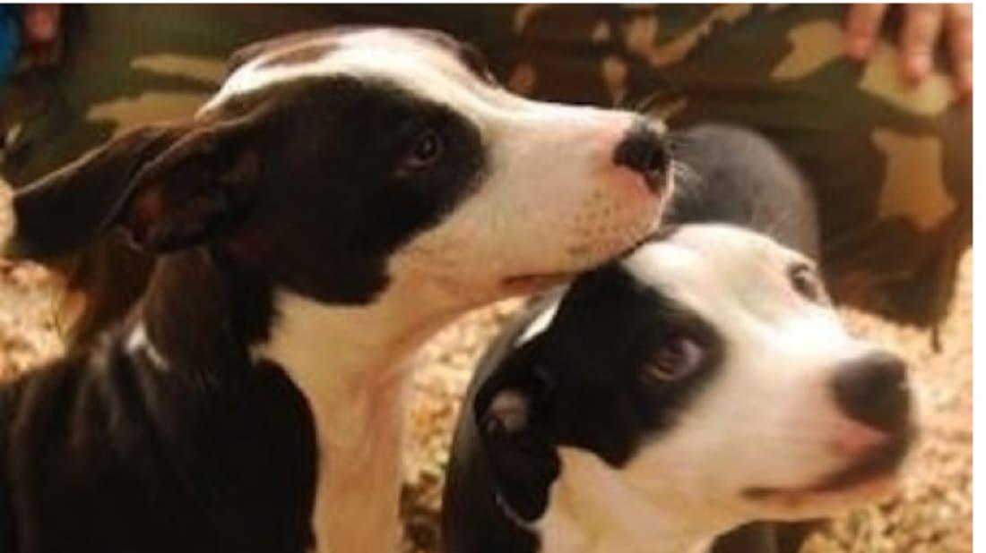 Chester County SPCA