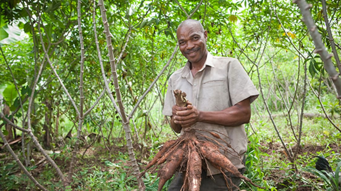Ramadhan Abdulla holds cassava on his farm in Tanzania.  © Bill & Melinda Gates Foundation/Jake Lyell