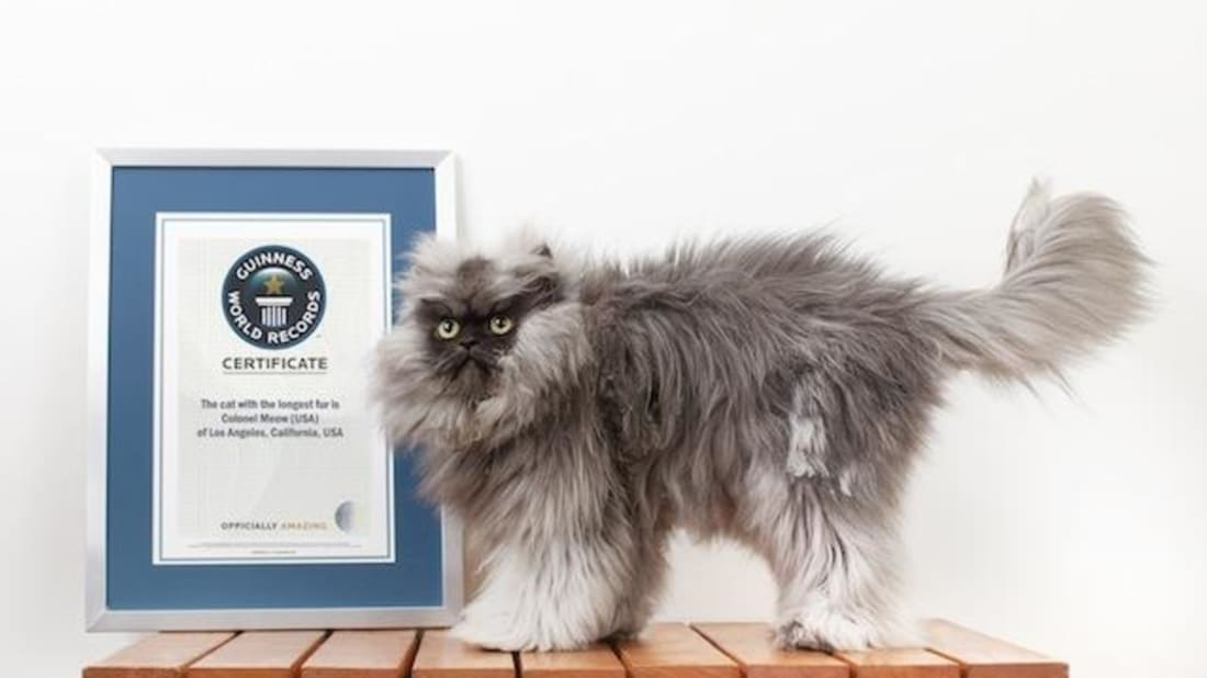 Guinness Book of World Records