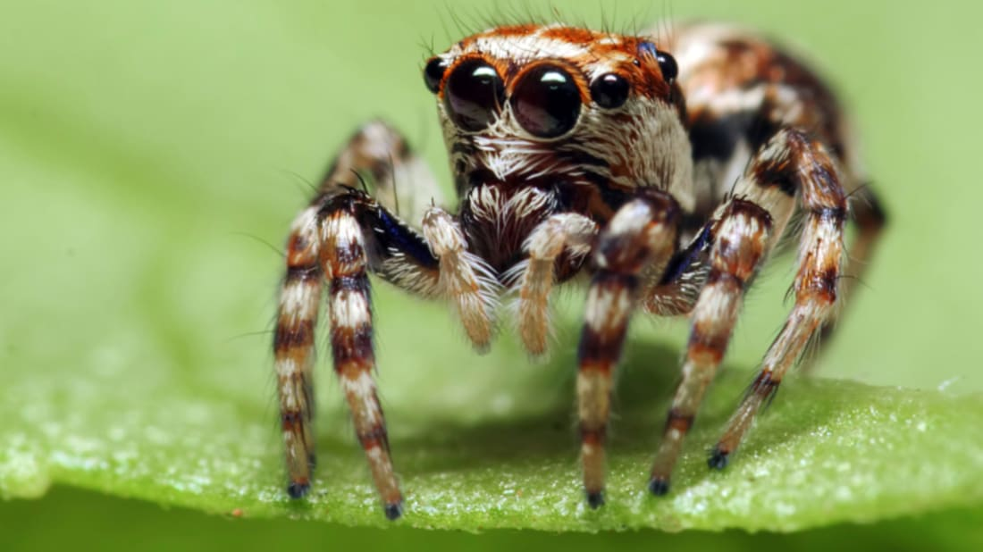 What Does Marijuana Do to Spiders? | Mental Floss