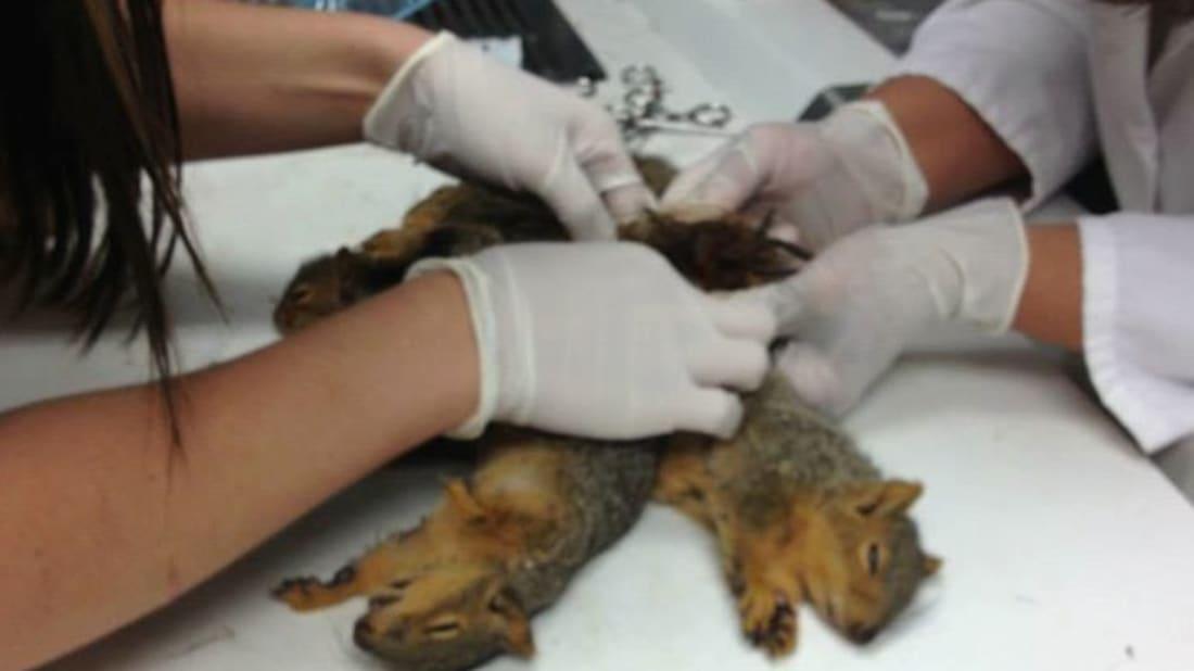 Animal Clinic of Regina